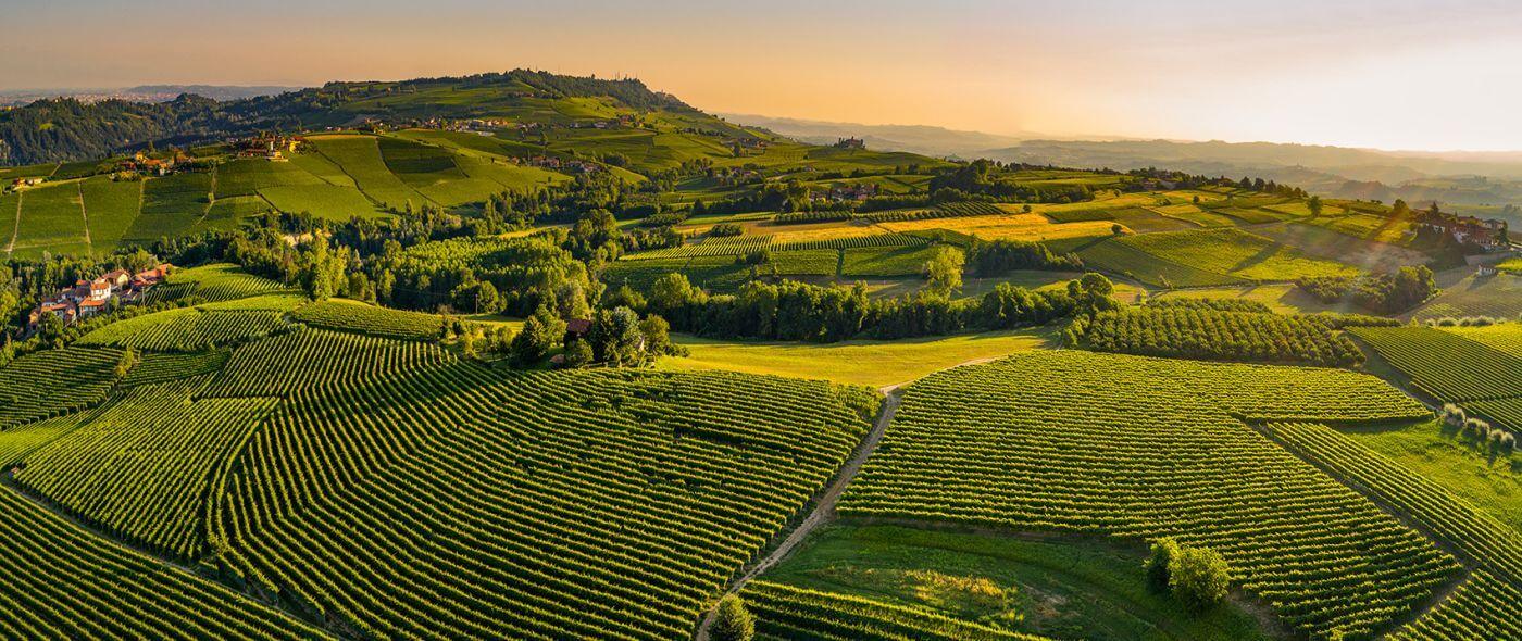 vigne del monferrato e langhe